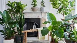 Biophilic Design Studio and Online Plant & Ceramics Store